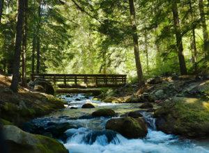 cold spring creek