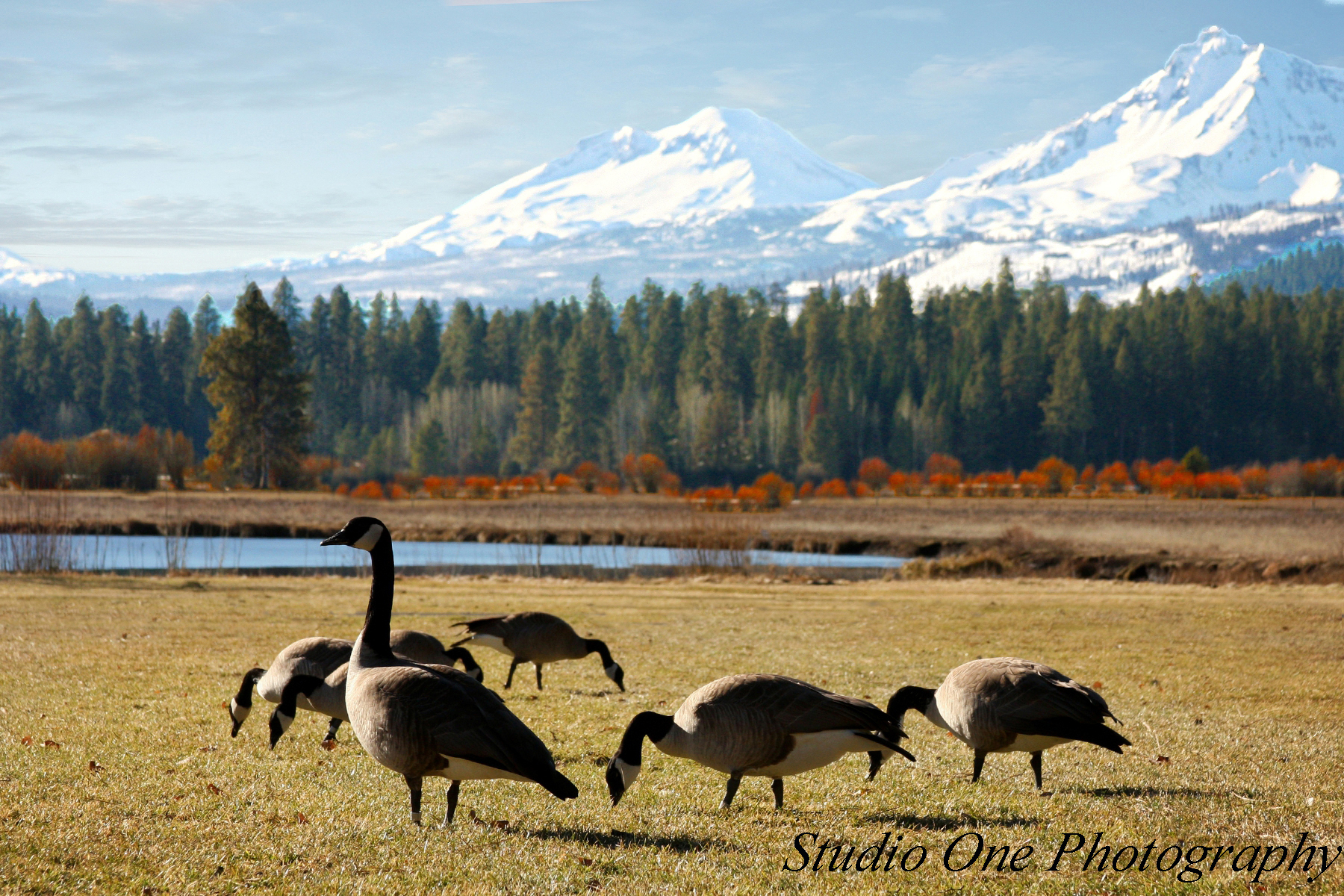 geese black butte oregon 2